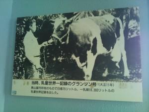 世界一の牛